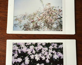Nature Polaroids - Volume IV