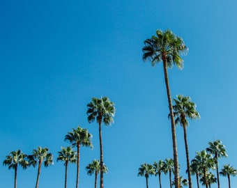 Palm Trees in Marrakech – A4 Print