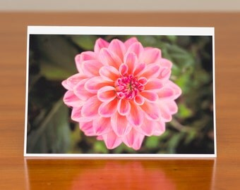 Pink Dahlia: flower photo greeting card