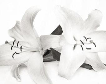 Lillies - White on White