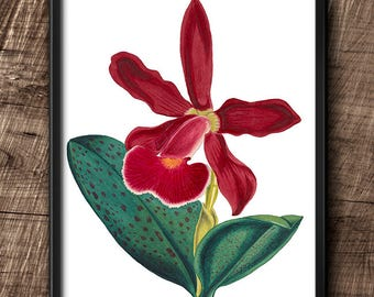 Red Orchid · 8x10 · Instant Download · Flower · Vintage · Wall · Printable · Digital File #64