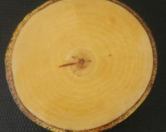 quaking aspen coaster