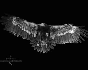 Bird of Prey photography, Eagle, Nature photography, Animal Photography, Limited edition, Wall art, Fine Art print, Nature, Bird Photography