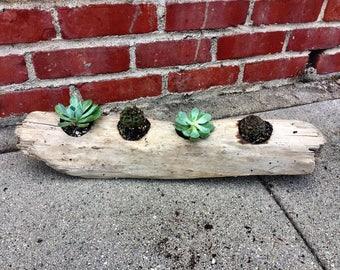 Driftwood Planter w/ succulents