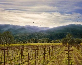 Napa Valley Vineyards - Landscape Photography - CA - color and black and white