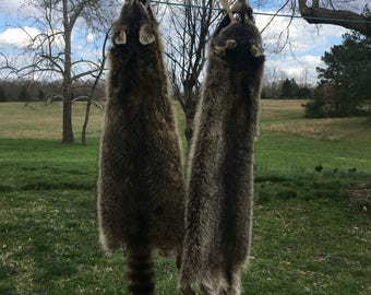 Raccoon skins