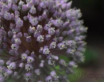 Macro Purple Flower Blank Photo Card