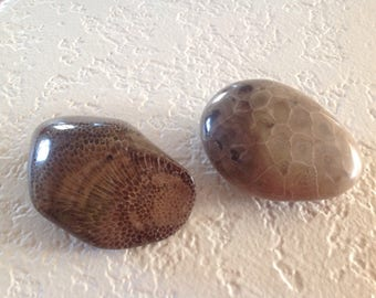 Two Hand-Polished Lake Michigan Fossils: One Petoskey Stone, One Charlevoix Stone