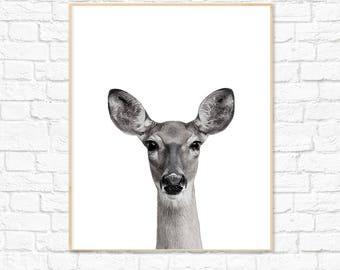 Animal Print, Animal Photography, Dear Print, Nursery Decor, Nursery Print, Wall Art, Instant Download, Baby Room, Kids Room, Baby Shower