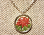 Waratah necklace / upcycled Australian stamp pendant / silver plated with 24 inch chain