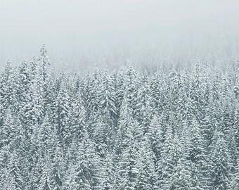 DTO - Winter's Whisper