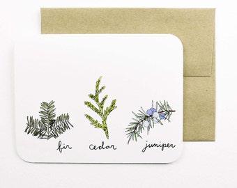 Evergreens card (fir, cedar, juniper) with envelope | Fir | Cedar | Juniper | Evergreen | Tree | Winter | Holiday card | Greeting card