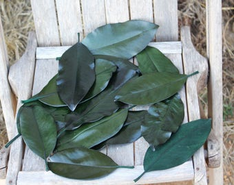 300 Magnolia leaves preserved green - Gift wrapping-Party Favors-Wedding invitations