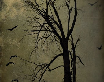 """Surreal landscape photography dark rustic abstract tree nature black brown - """"Night tree"""" 8 x 10"""