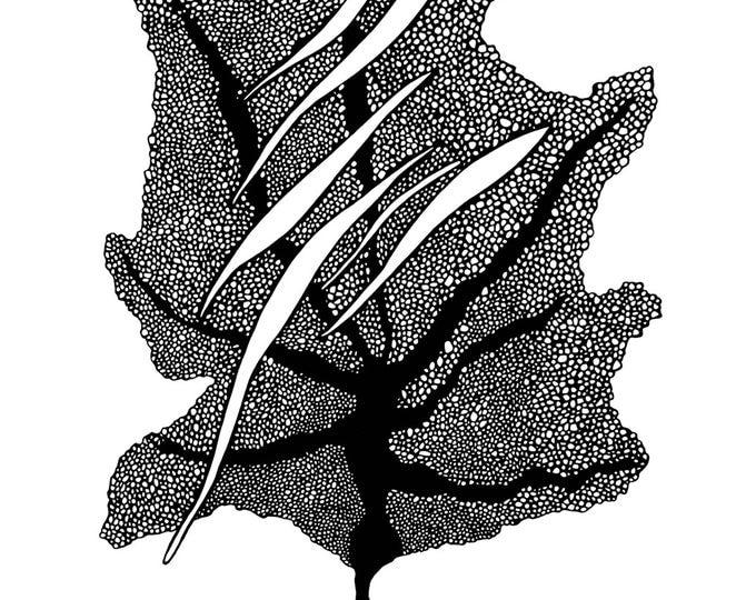 Ocean Leaf Pen & Ink