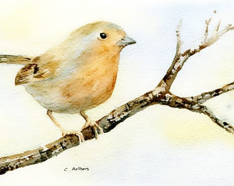 Robin -  4 x 6 inches Original Watercolor Painting