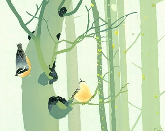 Nuthatches in Woods