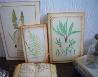 Miniature Vintage Botanical Fern Print Mounted LG for Dollhouse 1/12 Scale