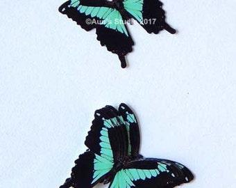 Paper Butterflies, small paper butterflies, black and green paper butterfly set