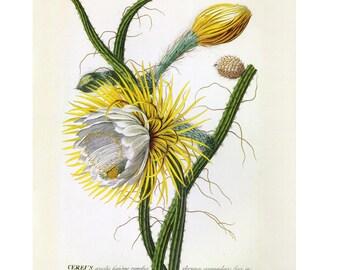 Night Flowering Fruit by Ehret Print Book Plate SALE Buy 3, get 1 Free