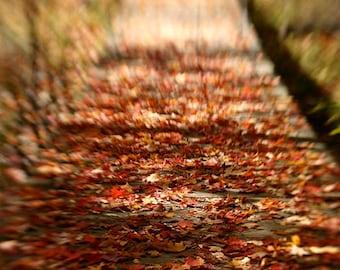 Nature Photography, Fall Leaves, Bridge, Fine Art Photograph, Orange, Warm Tones, autumn, photo, print, fallen leaves, reds, fall, Dreamy