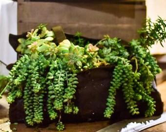 A new story. A new life. DIY succulent planter