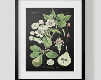 Botanical Pear Print Plate 420 Black Background