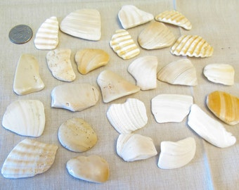 Shell Stone Pieces - 25 large smooth shell pieces, shell shards - 9 oz