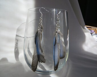 Feather Earrings on Silver Ear Wires, Feathers, Earrings, Silver Ear Wires, Blue Feathers