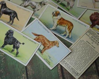 1 Vintage Dog Tobacco Card