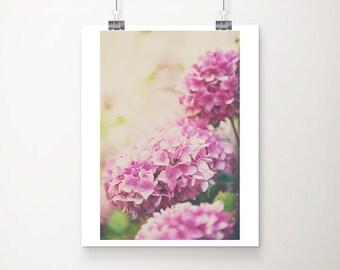 pink hydrangea photograph pink flower photograph nature photography summer photograph pink hydrangea print pink flower print