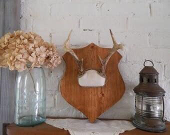 Vintage Deer Antlers - Mounted - Repurposed