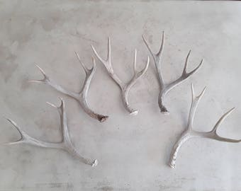 Five real deer antlers design decor crafts art centerpiece gift rustic natural antler sheds lamp display