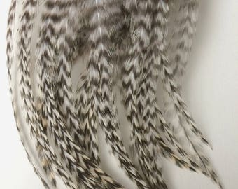 30 -  Grizzly Rooster Neck Hackles Feathers