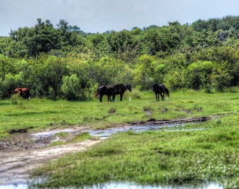 Wild Horses of Carolla 2