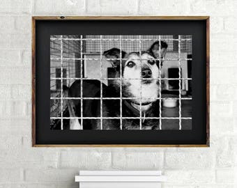 Black & White Shelter Dog  - Instant download digital print - Wall art - Photography - Poster - Home decor