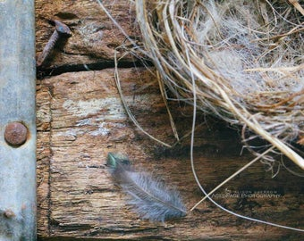 Bird Nest Photograph, Spring Wall Decor, Rustic Farmhouse Wall Decor, Bedroom Art, Country Style, Cottage Chic Decor | 'The First Flight'