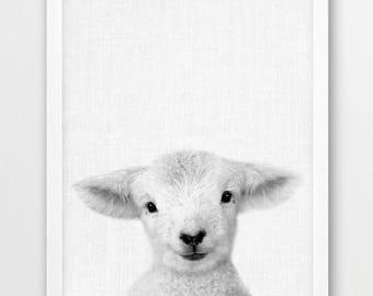Sheep Print, Baby Sheep Lamb Photo, Animals Photo, Nursery Animal Wall Art, Cute Animals Black White Photography, Kids Room Printable Decor