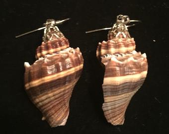 Shell Pierced Earings