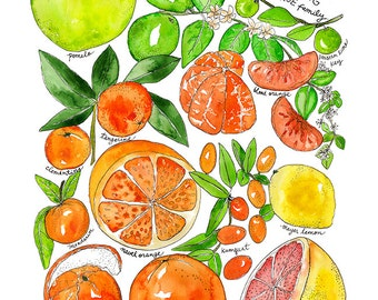 Citrus Family Watercolor Print Art