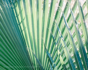 Palm Leaf Photography, Jungalow Style Art Print Green Botanical Nature Tropical Spring Abstract California Wall Art Prints Leaf Photography