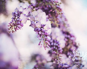 Flower Photography, Purple, Botanical Art Print, Shabby Chic Nature Photography, Romantic Home Decor - Alone
