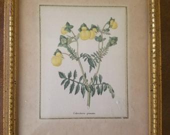 Sweet Vintage by Maund Botanical Print
