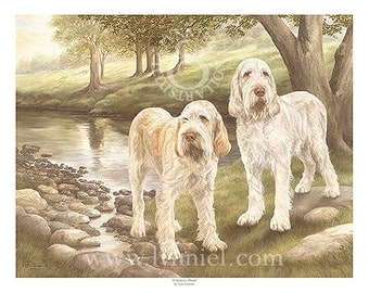 ITALIAN SPINONE limited edition dog print 'At Spinney Brook'