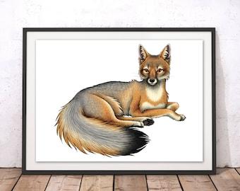 Swift Fox Art Print Swift Fox Wall Art Brown Fox Print By Lyndsey Green