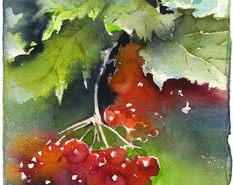 Snowball tree watercolor - guelder rose painting, fine art print, ukrainian print,  watercolor painting paper