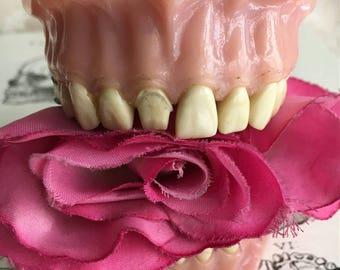 Vintage Dental Model Porcelain Teeth Dentist Dream Steampunk Obscura Cabinet of Curiosities