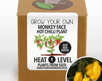Grow Your Own Monkey Face Chilli Plant Kit