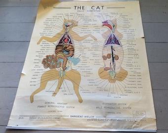 Cat Anatomy Poster, Vintage Veterinary Medical Salvage