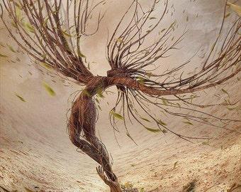 Sacred Woods *Sandalwood & Amber* Blended Oil  (1/4 oz)